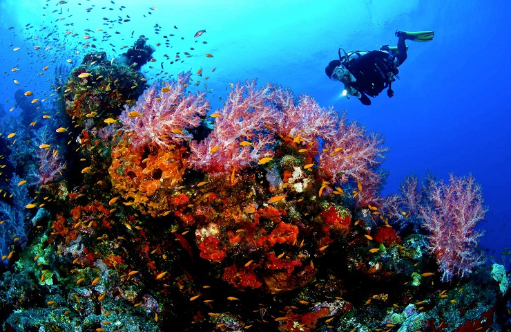 Snorkeling In The Amalfi Coast In The Heart Of The Sea Among The Colored Bottoms Insolita Italia